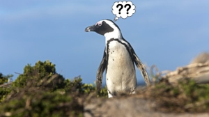 Lost-Penguin-England-1317758151