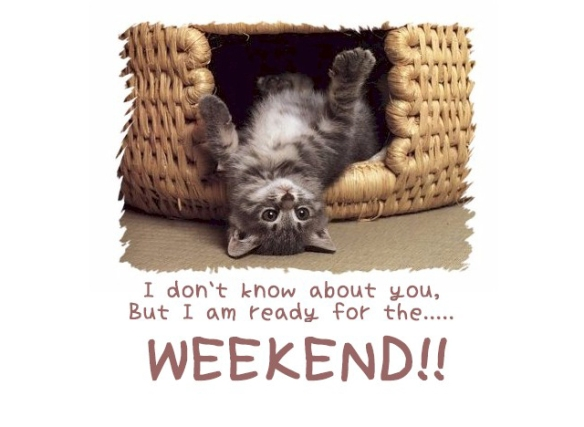 Weekend cute cat