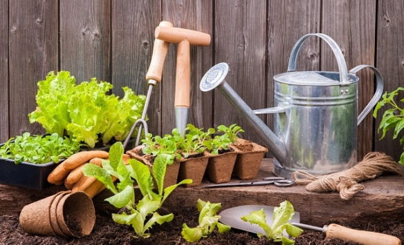How-to-become-a-gardener